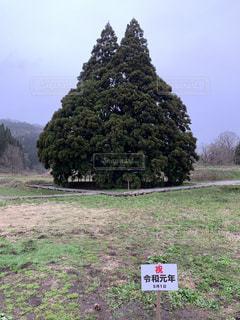 背景に木がある草の生えた野原の標識の写真・画像素材[2179741]