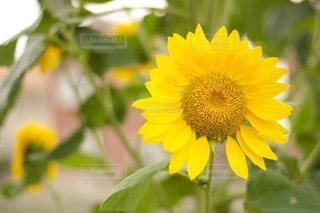 花の写真・画像素材[74804]