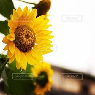 花の写真・画像素材[74809]