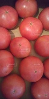新鮮トマトの写真・画像素材[3573326]