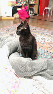 座っている猫の写真・画像素材[1940156]