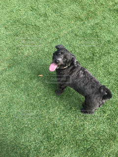 その口でフリスビーで遊ぶ犬の写真・画像素材[1942553]