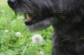 犬と植物の写真・画像素材[2305928]