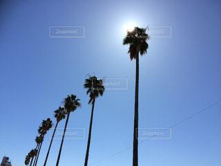 真っ青な空に降り注ぐ太陽の光の写真・画像素材[2606683]