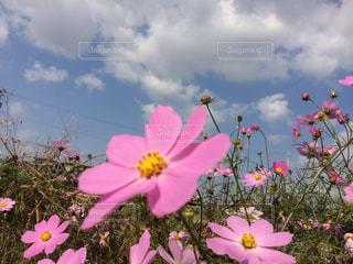 道端の花の写真・画像素材[2677376]