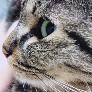 猫の写真・画像素材[1949973]