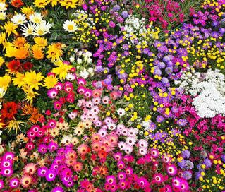 カラフルな花たち💐の写真・画像素材[2076267]