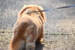 犬の写真・画像素材[1984443]