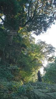 大木を見上げる女性の写真・画像素材[1968487]