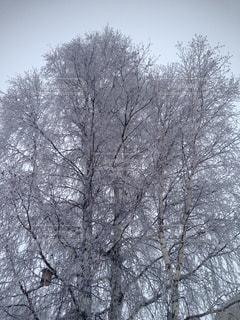 冬の写真・画像素材[1968555]