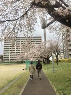 木の隣に立っている人の写真・画像素材[2221018]