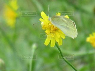 蝶と花の写真・画像素材[2214783]