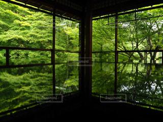 新緑の窓の写真・画像素材[2000661]