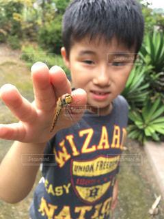 昆虫採集の写真・画像素材[2402948]