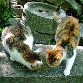 猫の写真・画像素材[119160]