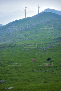 緑豊かな野原で放牧する羊の群れの写真・画像素材[2335596]