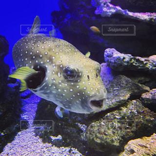 魚の写真・画像素材[1948511]
