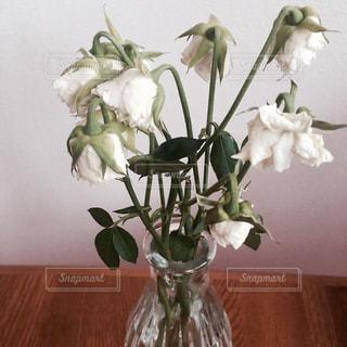 花の写真・画像素材[1969342]