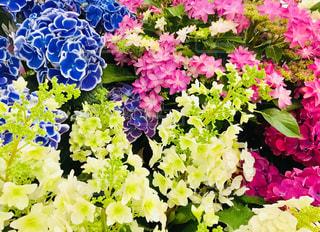 花の写真・画像素材[1982272]