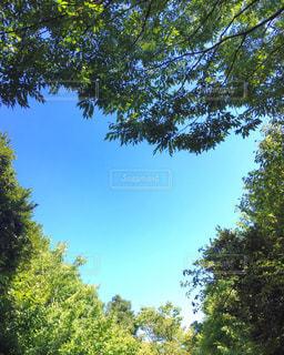 空の写真・画像素材[2151625]