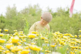 春の写真・画像素材[2095768]