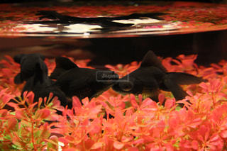魚の写真・画像素材[2046769]