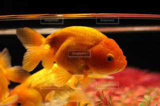 魚の写真・画像素材[2046771]