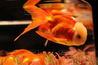 魚の写真・画像素材[2046772]