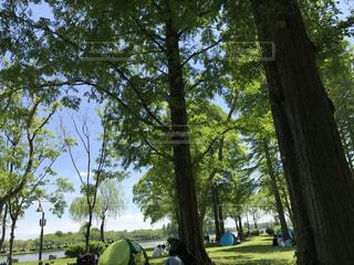 水元公園の写真・画像素材[487942]