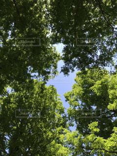水元公園の写真・画像素材[487944]