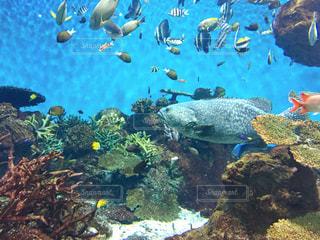 水族館の写真・画像素材[2582041]