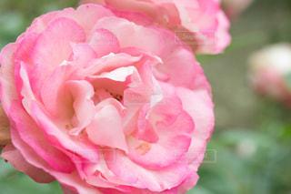 花のクローズアップの写真・画像素材[2288463]