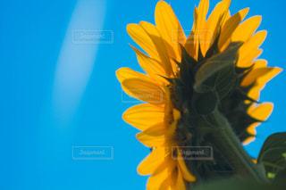 花のクローズアップの写真・画像素材[2362943]