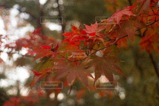 木の近くでの写真・画像素材[2702471]