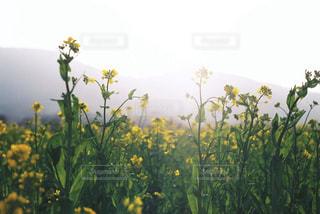 花のクローズアップの写真・画像素材[3069249]