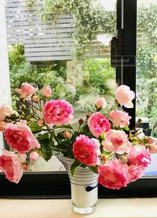 窓辺のピンクの花2の写真・画像素材[1976384]