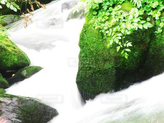 苔蒸した川の写真・画像素材[2284609]