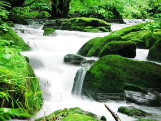 緑の奥入瀬の写真・画像素材[2286606]