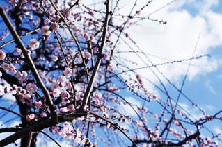 木の枝につるされた鳥の写真・画像素材[2287708]