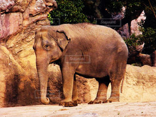 象さんの写真・画像素材[2288759]
