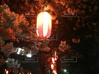 提灯と夜桜の写真・画像素材[2289374]