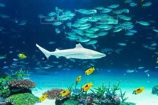 海の写真・画像素材[73612]