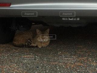 猫の写真・画像素材[90610]