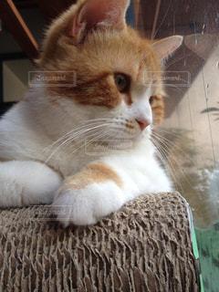 猫の写真・画像素材[1999941]