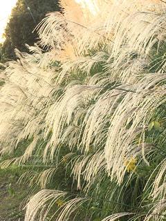 植物のクローズアップの写真・画像素材[2419302]