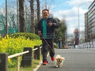犬をひもで歩いている人の写真・画像素材[3325597]