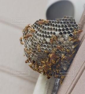 巣のクローズアップの写真・画像素材[3585799]