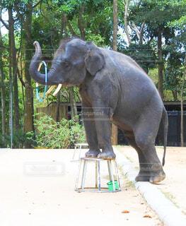 象の像の写真・画像素材[4437903]