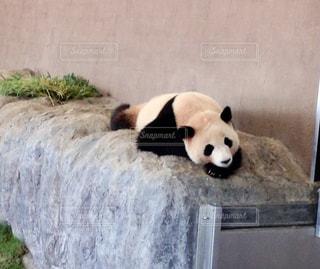 おやすみパンダの写真・画像素材[1979074]