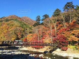 紅の橋の見事な紅葉の写真・画像素材[2005656]